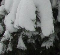 snijeg5