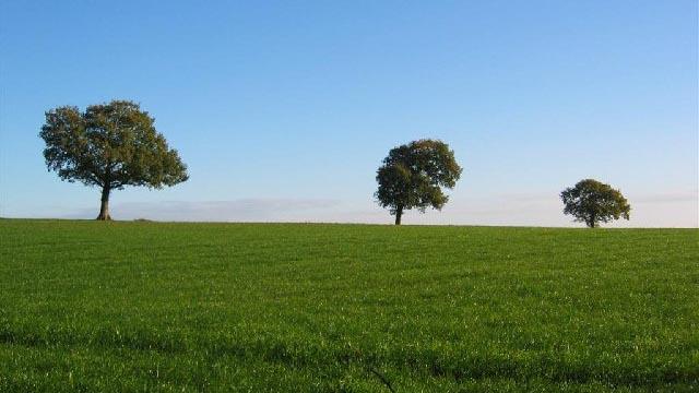 tri_stabla